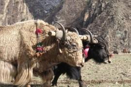 De overland naar Tibet - Namse Zampa naar Lhasa