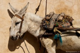 Bussen naar Marrakech