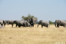 Moremi Nationaal Park - Olifanten