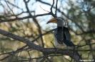 Khama Rhino<br />Sanctuary -<br />Neushoornvogel