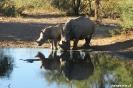 Khama Rhino Sanctury - Neushoorns bij de vogelpoel