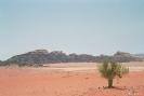 Wadi Rum - Eenzaam groen
