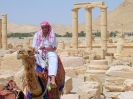 Palmyra - Mr Cool