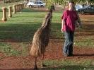 WA - Exmouth, emu op de campoing