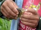 Pampastrip -<br />Piranhavissen