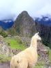 Machu Picchu - Genieten van het uitzicht