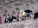 Zhongdian naar Lhasa - Nomaden onderweg