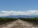 Mendoza - druiven, Andes, Mendoza
