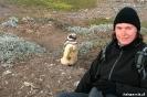 Punta Arenas - Seno Otway pinquin kolonie