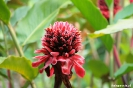 Torteguero - mooie bloem
