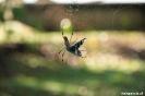 Torteguero - spin met vangst