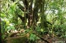 Volcan Arenal - groen