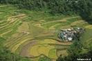 Rijstterrassen van Bangaan