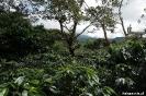 Boquete - koffie plantage Cafe Ruiz